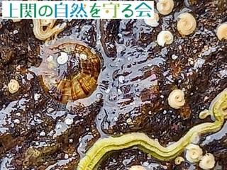 20210630カサシャミセン.jpg