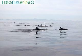 イルカの大群210606.jpg