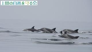イルカの群れ210912.jpg