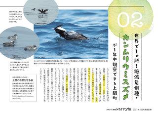 カンムリウミスズメ‗トライアングル210128.jpg