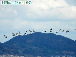 ヒドリガモほか2_200930.jpg