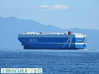 自動車運搬船  AZUL ACE210828.jpg